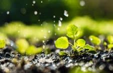 Egal ob Salat oder blühende Staude: Ohne Wasser haben beide keine Überlebenschance